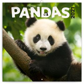 Poznámkový kalendár Pandy 2021, 30 × 30 cm