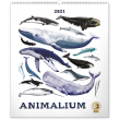 Nástenný kalendár Animalium – Lucie Jenčíková 2021, 48 × 56 cm