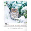 Nástenný kalendár Mačky 2019, 30 x 34 cm